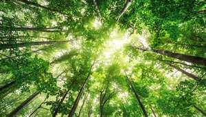 Verde 'Greenery' es el color del año 2017