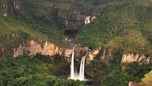 Como as raízes do Cerrado levam água a torneiras de ...