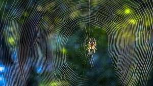 Las arañas podrían comerse a toda la humanidad en un ...
