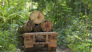 Áreas de conservação desmatadas na Amazônia estão ...
