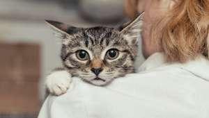 Oração de Sta. Gertrudes para proteger seus gatos