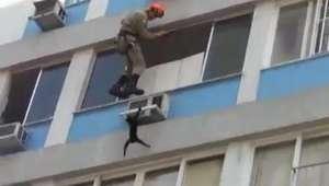 Fujão! Gato dá trabalho durante resgate no alto de prédio no Rio