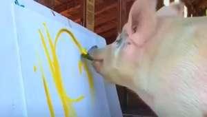 Pigcasso impressiona o mundo com suas obras de arte