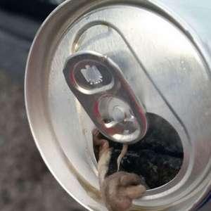 Se toma cerveza en lata y encuentra en ella a una rata