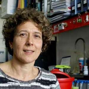 Una investigadora argentina es destacada en América Latina