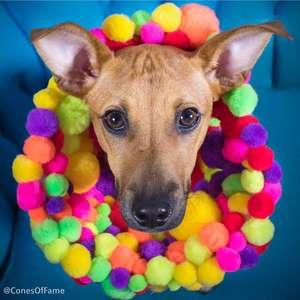 """Artista """"embeleza"""" cães de abrigo para facilitar adoção"""