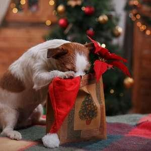 Doces e chocolate podem ser um veneno para seu cachorro ...