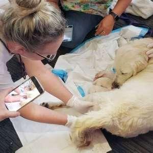 Cachorra dá à luz oito filhotes em terminal de embarque ...