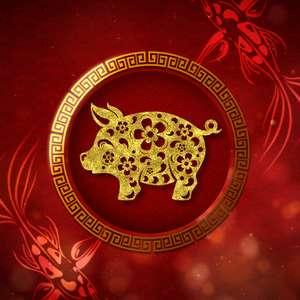 Ano do Porco, animal rege o zodíaco chinês em 2019