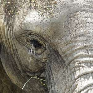 Morte de elefante do deserto a mando de governo gera revolta