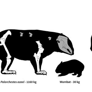 Austrália abrigou marsupiais gigantes que pesavam mais ...