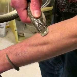 O homem que recebeu picadas de 200 cobras em nome da ciência