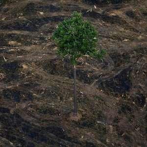 """Amazônia pode chegar a """"ponto de não retorno"""" em até 30 anos"""