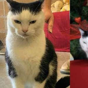 """""""Pior gato do mundo"""" está disponível para adoção"""