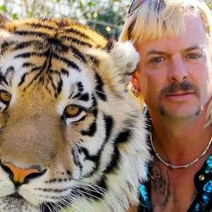A Máfia dos Tigres: Informação SURPREENDENTE sobre ...
