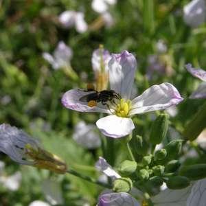 Abelhas geram renda extra e elevam produtividade agrícola