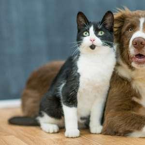 Gatas e cadelas podem ter filhotes de pais diferentes?