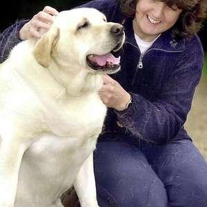 Os riscos do sobrepeso para animais de estimação