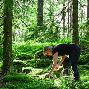 O que é a dieta nórdica, que pode fazer bem à saúde e é ...