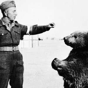 Conheça o urso que combateu os nazistas na Segunda Guerra