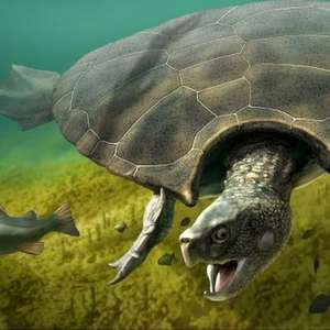 Fóssil revela tartaruga pré-histórica do tamanho de um carro que viveu na Amazônia