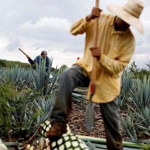 """""""Não consigo parar"""": pandemia desafia economia informal"""