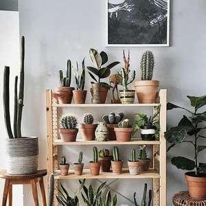 Plantas Pequenas: +55 Plantas com Flores Lindas para ...