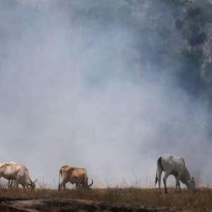 Frigoríficos brasileiros compraram gado ligado ao desmatamento, diz Greenpeace