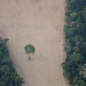 Desmate na Amazônia em 10 meses já são 92% do ano anterior