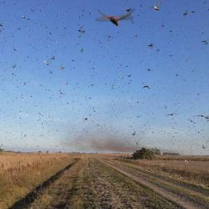 Agricultura declara estado de emergência no RS e em SC