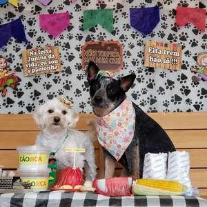 Festa Junina: confira dicas para fazer fotos temáticas com seu cachorro