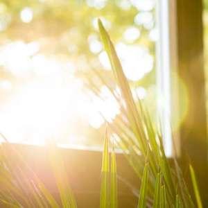 Conheça quatro dicas para o cuidado com as plantas no ...