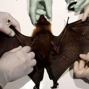 Coronavírus: doenças que passam de animais ao homem ...