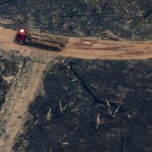 """""""Desmatamento ilegal não atrai investimentos e prejudica ..."""