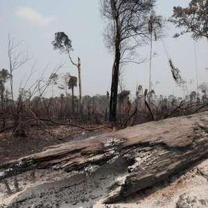 Mesmo com mais desmatamento, Ibama pode perder verbas no ...