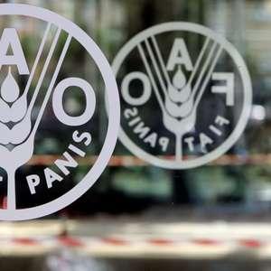 """Fome cresce na América Latina a níveis """"assustadores"""", ..."""