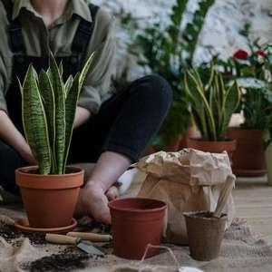 9 plantas que atraem dinheiro e prosperidade para ter em casa