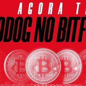 Parceria entre Bodog e Bitfy oferece depósitos e ...