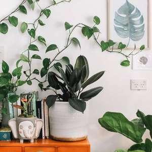Conheça as plantas que afastam energias negativas do lar ...