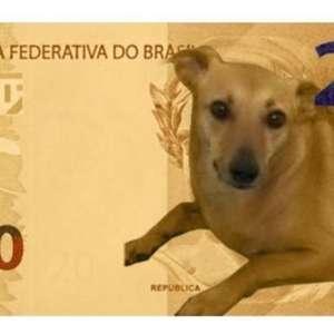 Banco Central nega nota de R$ 200 com vira-lata caramelo mas estuda ação com animal