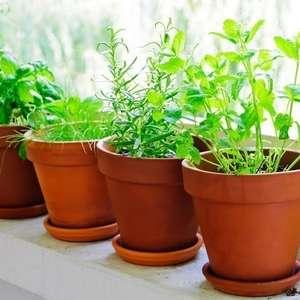 Os 9 melhores e mais fáceis temperos para se plantar em casa