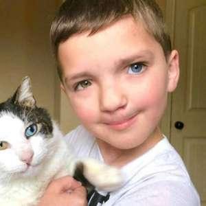 Dia Internacional do Gato: veja dicas de como cuidar dos ...