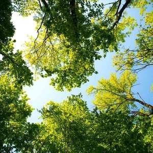 Por que as áreas preservadas são tão importantes para a ...