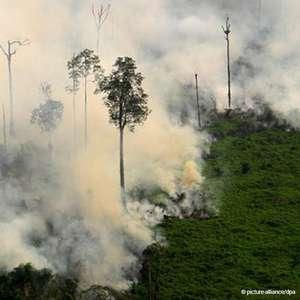 Em um ano, desmatamento na Amazônia cresce 29%