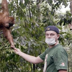 Leonardo DiCaprio volta a condenar desmatamento da Amazônia
