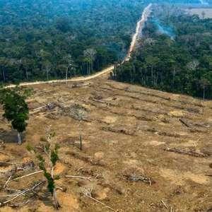 Governo ignora combate ao desmatamento em plano até 2031
