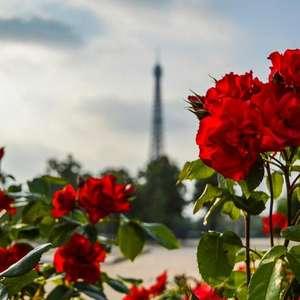 Dicas para deixar sua casa mais romântica na primavera