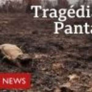 Pantanal queima e vive sua pior tragédia ambiental das últimas décadas