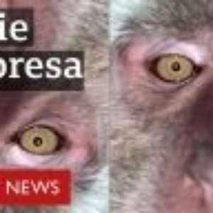 Estudante encontra selfies de macaco em celular perdido; veja