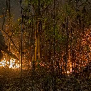 Os seis fatores que tornam incêndios no Pantanal ...